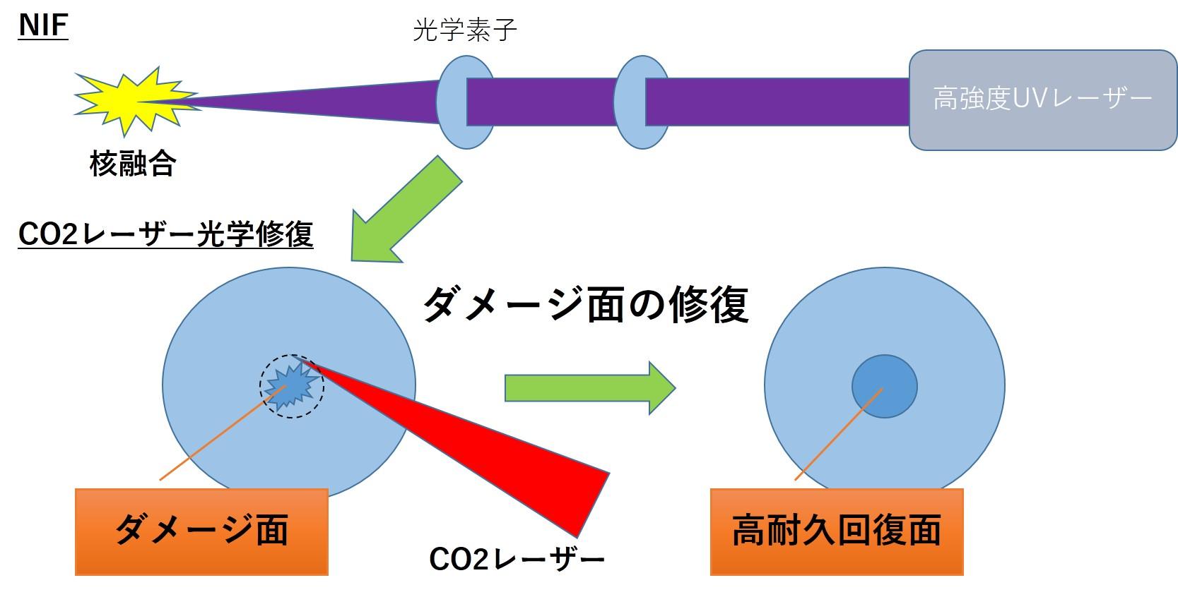 米田研究室:研究内容